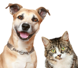 Adopt a Pet in Fremont County